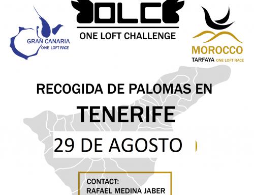 MAÑANA RECOGIDA DE PALOMAS EN TENERIFE