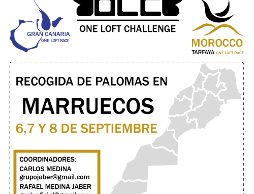 PIGEON COLLECTION FOR MOROCCO TARFAYA OLR IN MOROCCO, SEPTEMBER 6-8
