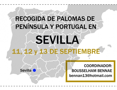 AGRUPACIÓN DE PALOMAS EN SEVILLA, 11,12 Y 13 SEPTIEMBRE